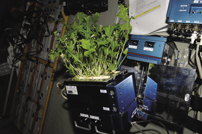 Lettuce grown on the ISS