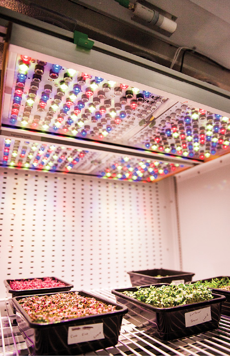 Space Station Garden Shines Light on Earth-Based Horticulture