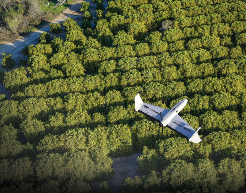 An overhead view of the Quantix drone flying above rows of leafy trees in an orchard