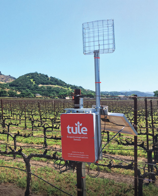 A Tule wind sensor mounted on a pole in a vineyard, surrounded by rows of woody vines