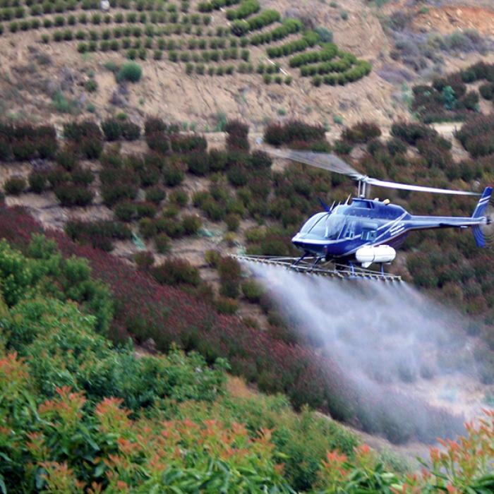 A helicopter sprays BAM-FX over a hillside field